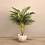 Thumbnail: Potted Artificial Silk Areca Palm Tree Indoor Plant