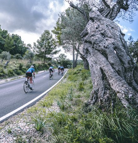 Olive oil Mallorca.jpg