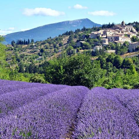 Monieux-lavender-provence-france.jpg