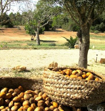 The Mallorcan Almond