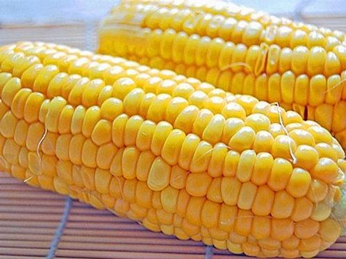 Corn 結構甘いとうもろこし