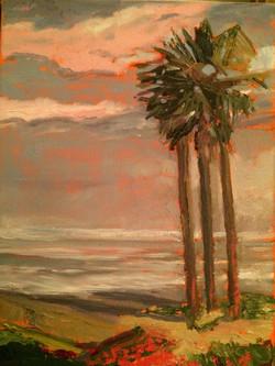 Del Mar Palm