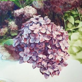 Hydrangea season_._._._.jpg