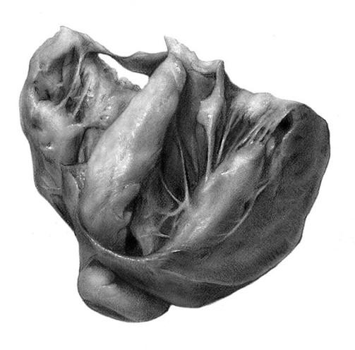 Carbon Dust Pig Heart
