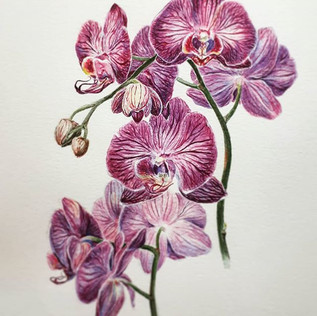 Throwback to an old orchids piece_._._._
