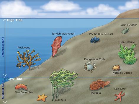 Intertidal Zone Organisms