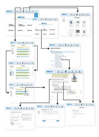 Website Desgin: User Flow Diagram
