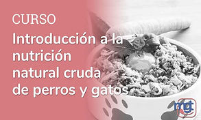 curso introduccion a nutricion natural barf