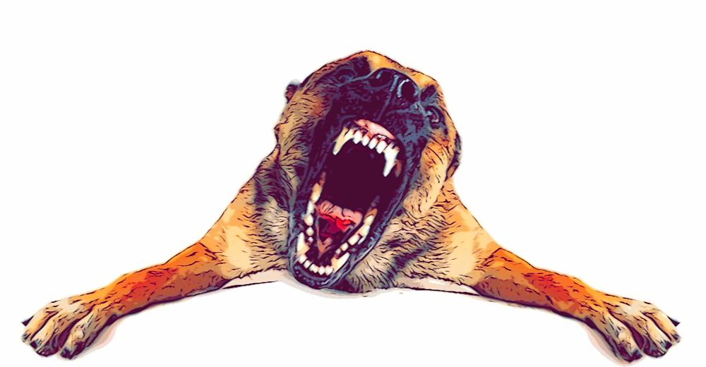 La agresividad en el perro