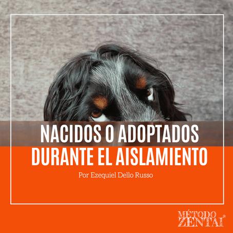 Perros nacidos o adoptados durante el aislamiento