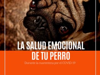 La salud emocional de tu perro