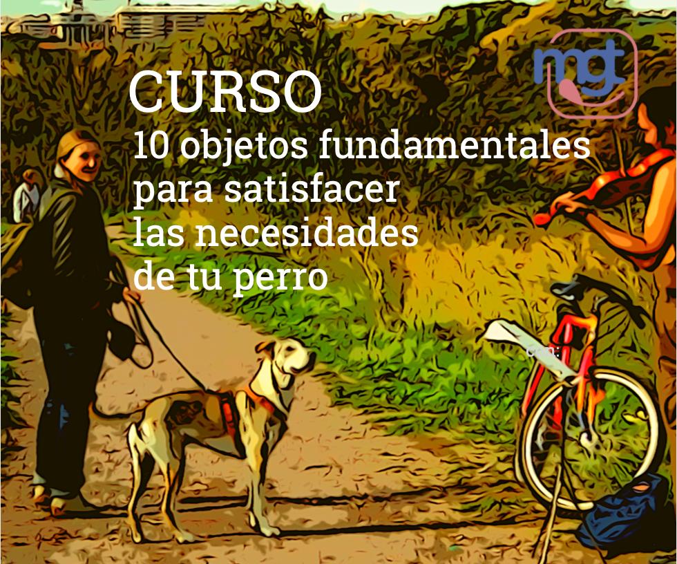 Curso educación canina en Madrid