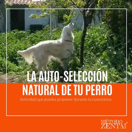 La auto-selección natural de tu perro