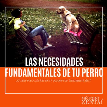 Las necesidades fundamentales de tu perro. ¿Cuáles son, cuántas son y porqué son fundamentales?