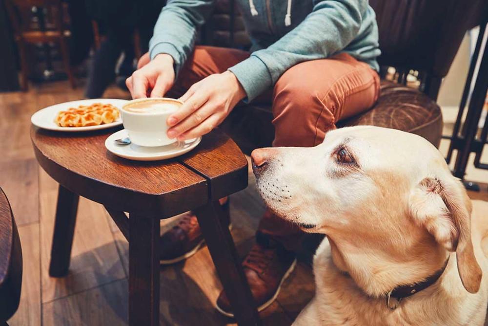 Educar a mi perro en Madrid