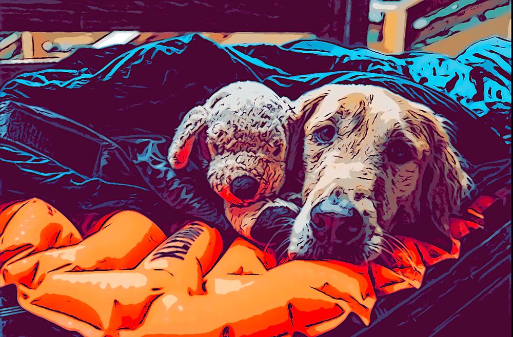La importancia de la manta de tu perro