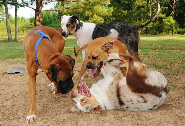 the-top-5-tacoma-dog-parks-your-pooch-wi