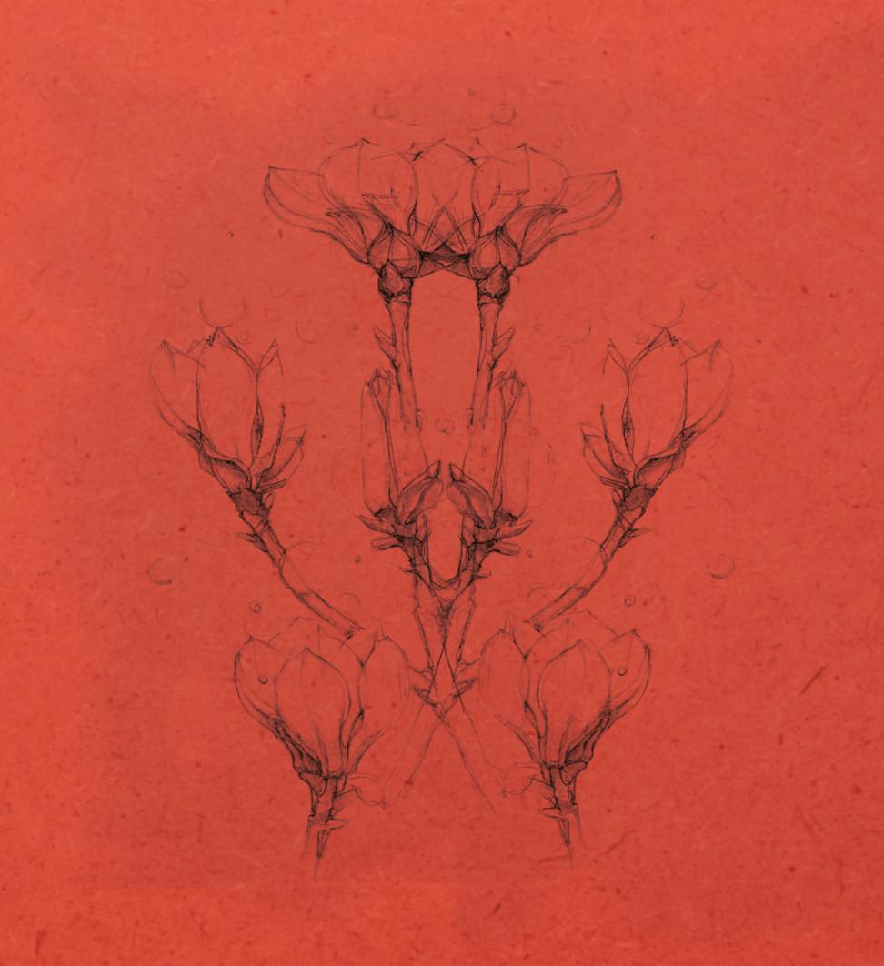 Magnolie lowres 13.jpg