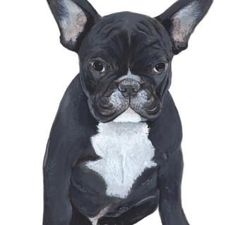 Gracie the French Bulldog   Helen Platania Art