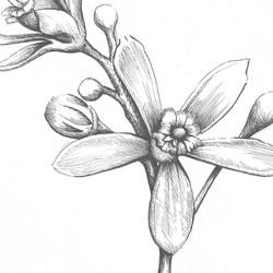 Lauren Reis Illustration