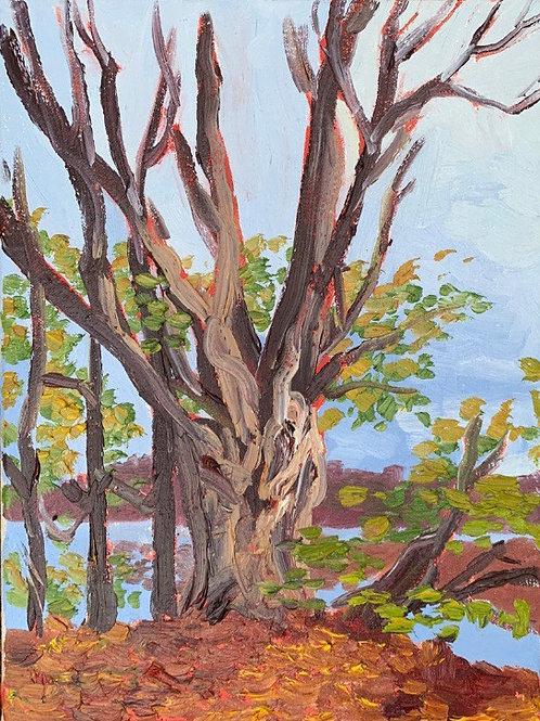 """Halloween Tree - Marsh Creek"""