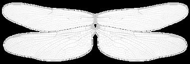 wings%20copy_edited.png