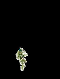Mala hierba alta