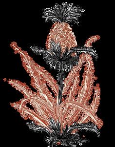 Piña con hojas