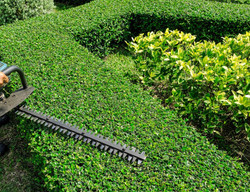 PRUNING & HEDGING SERVICES