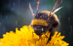 Biodiversity is Local Authority business