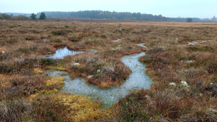 World Wetlands Day: New project will restore and rehabilitate peatlands