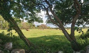 NPWS to triple Farm Plan Scheme to benefit nature