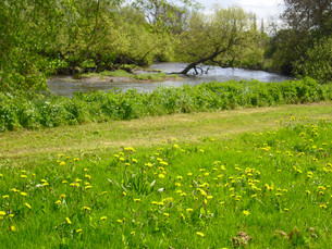 €1.35m for biodiversity projects in Local Authorities announced by Minister Noonan