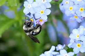 2nd All-Ireland Pollinator Plan launched by Minister Noonan