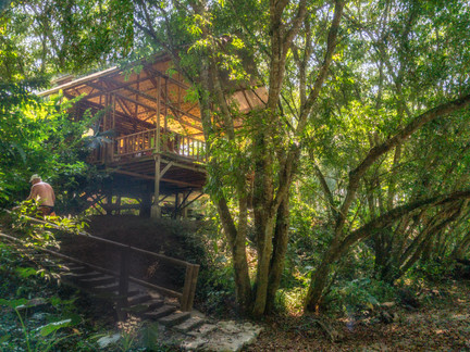jungle lodge222.jpg