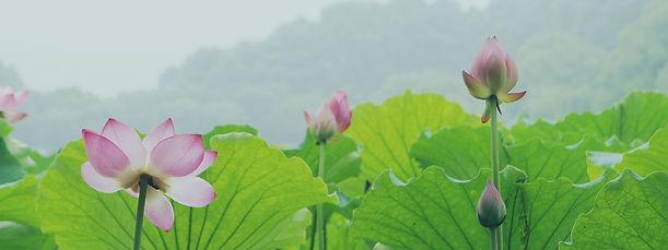 lotus-939147_1920.jpg