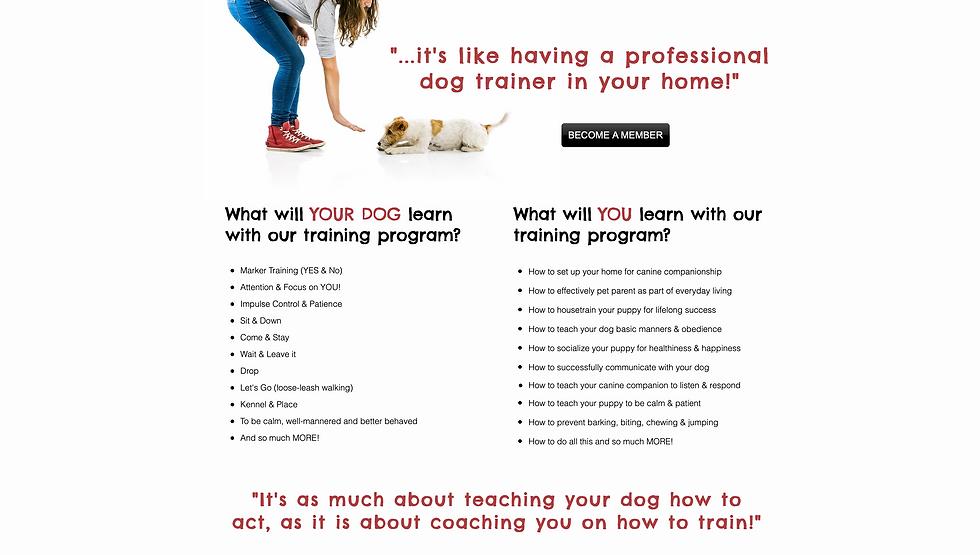 Baxter & Bella Dog Training