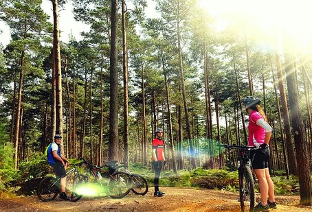 Swinley Forest MTB Review
