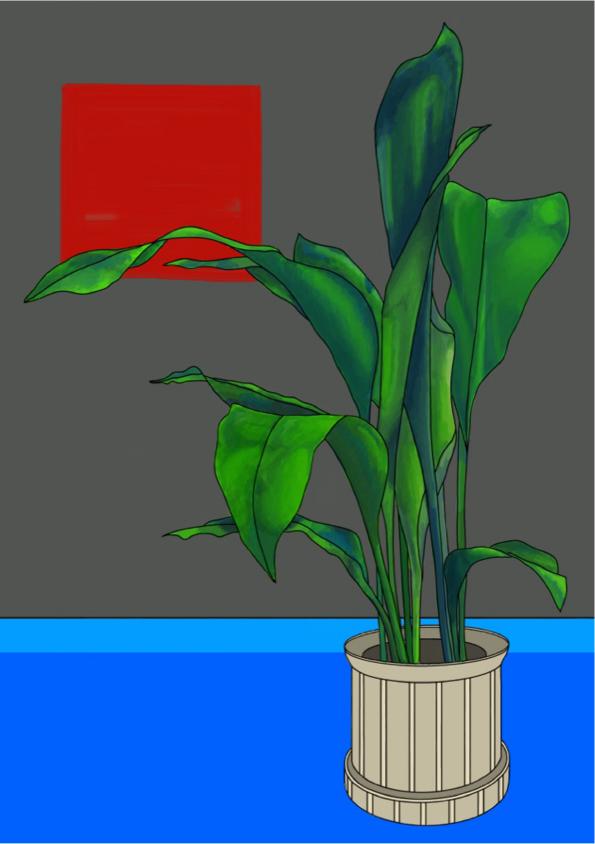 aspidistra colour