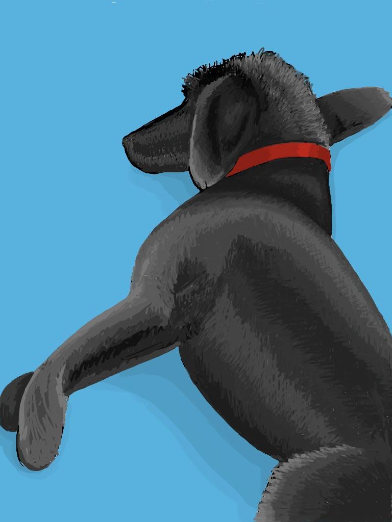 grey dog_blue rug