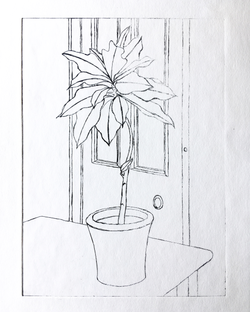 dining room plant_drypoint
