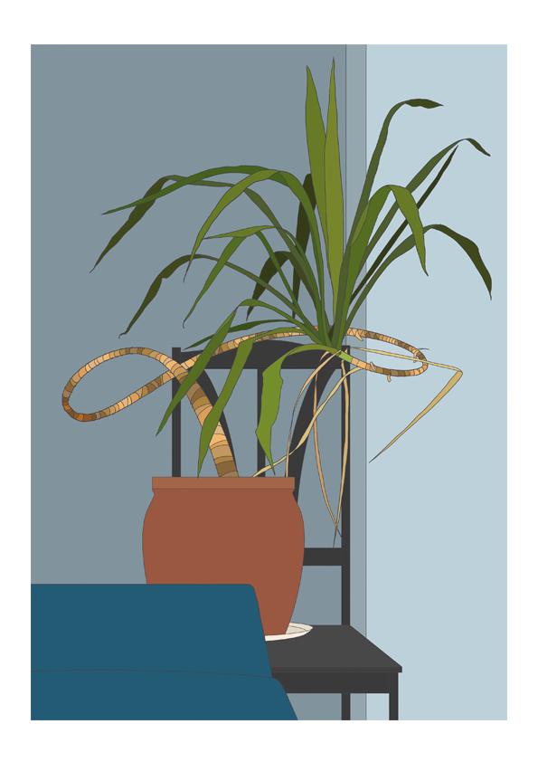 yucca_colour
