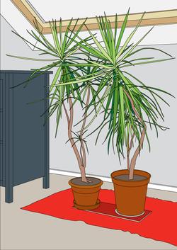 loft plants