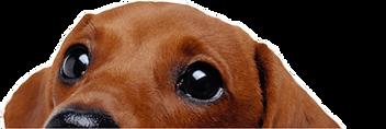DOG-min.png