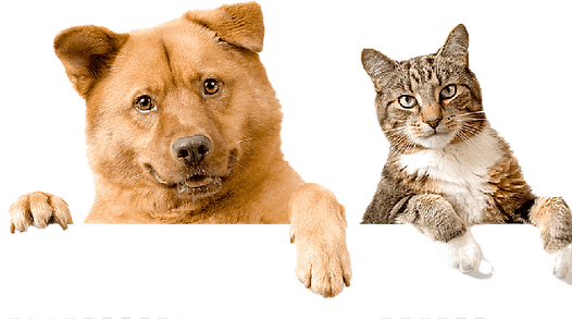 PNG_PET_DOG_CAT-removebg-preview.png
