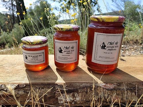 Miel de garrigue d'été (buplèvre)