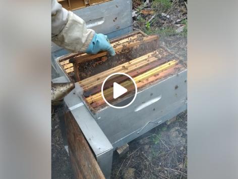 Contrôle des ruches au printemps