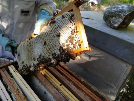 Le miel ça vient d'où ?