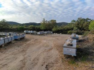 L'hiver dans la ruche : visites de contrôle