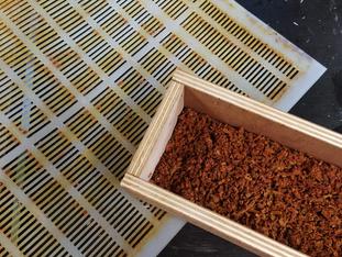 Récolte de la propolis